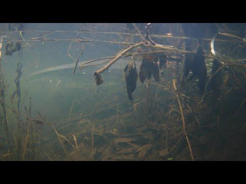 Карпы в бесхозном пруду: секретный эксперимент - 24 серия