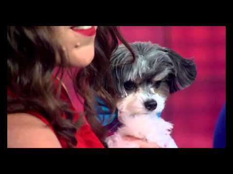 'The Pet Lady' Dana Humphrey with Tinkerbelle the Dog with Holiday Tips on News 12