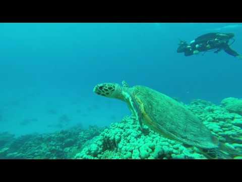 Promenade sous marine avec une tortue en Égypte