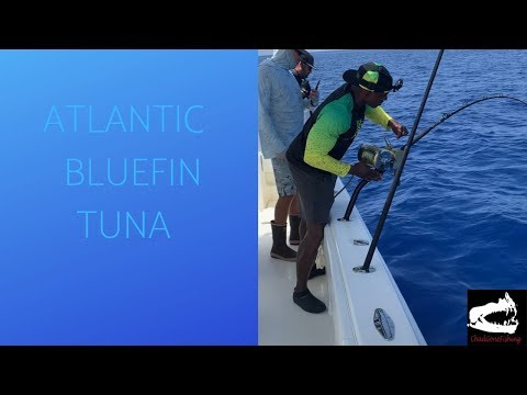 Monster Atlantic Bluefin Tuna
