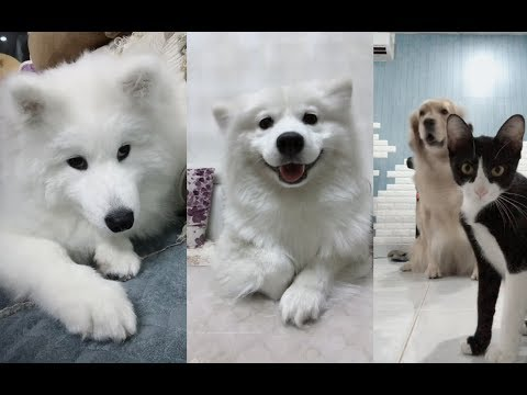 Dogs ears dance to the beat Compilation