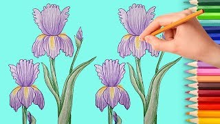 How to Draw an Iris Flower Easy Step by Step Learn to Draw with Flowers Coloring Pages for Kids