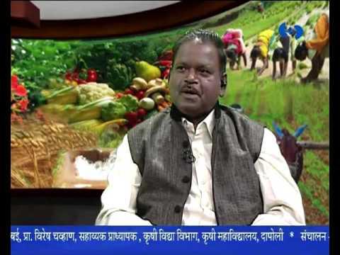 'Importance of Agriculture Advice Based on Weather' _ 'हवामान आधारित कृषी सल्ला'