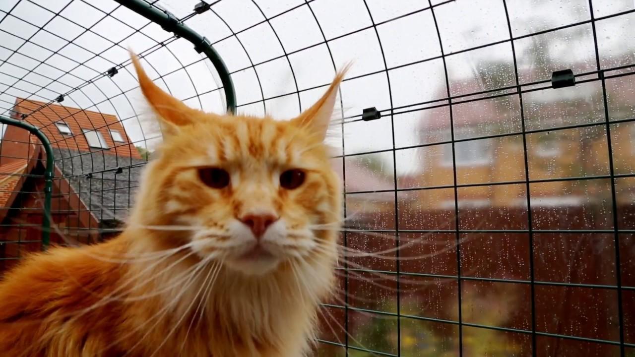 Rete Per Gatti Condominio recinto walk-in per gatti: la protezione perfetta per i tuoi animali! |  omlet italia