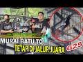 Murai Batu To Milik Arb Dari Jbt Tetap Di Jalur Juara Bali Spektakuler Cup  Persaingan Ketat  Mp3 - Mp4 Download