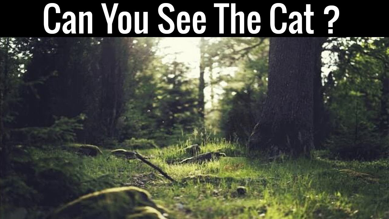 hidden optical illusions brain animals teasers nobody illusion teaser forest