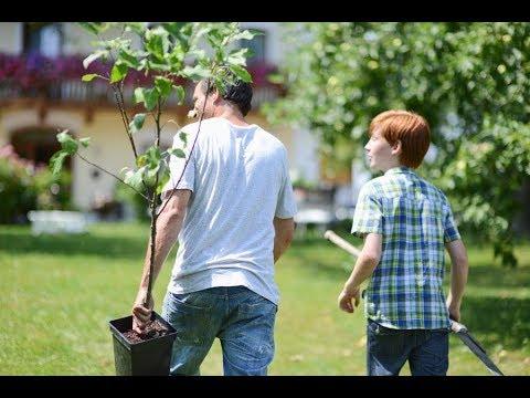 Посадка деревьев ЛЕТОМ