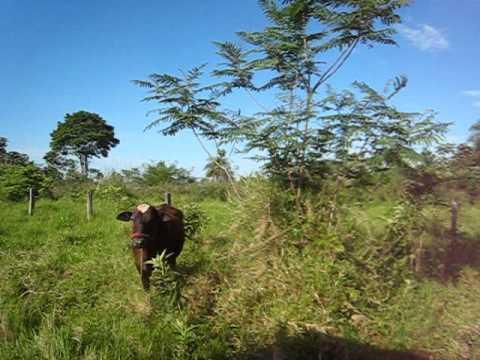 Driving on Paraguayan dirt roads (tape pyta) 2