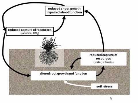 A physiological perspective of crop growth, yield, water and nitrogen use efficiency