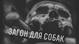 Загон для Собак 27.01.18