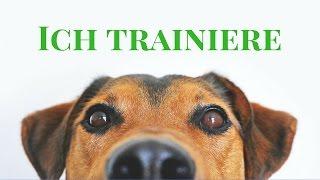 Hundetraining Online - Tipps und Empfehlung - Teil 3