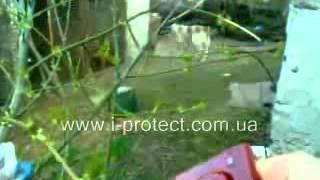 видео Купить портативный отпугиватель собак SITITEK ГРОМ-250М