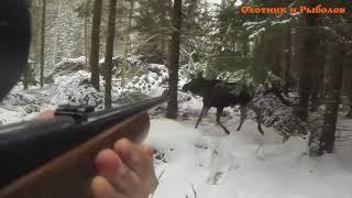 Охота на лося: подборка лучших выстрелов
