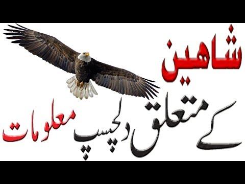Facts About Bird | Shaheen Bird | Rare Bird | Information About Bird | Bird Facts | Hidden Secrets