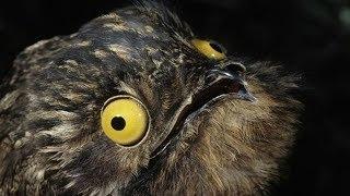 10 Самых странных животных амазонки!
