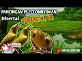 Pancingan Pleci Bahan Bakalan Ombyokan Agar Cepat Buka Paruh Disertai Terapi Gemercik Air Mengalir  Mp3 - Mp4 Download