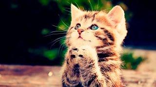 Котенок. СИМУЛЯТОР мимимишки - веселое видео для детей про Маленького котика #ПУРУМЧАТА