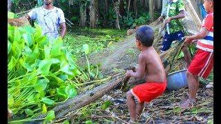 Net Fishing | Traditional Net fishing in Bangladeshi village | Fishing with net