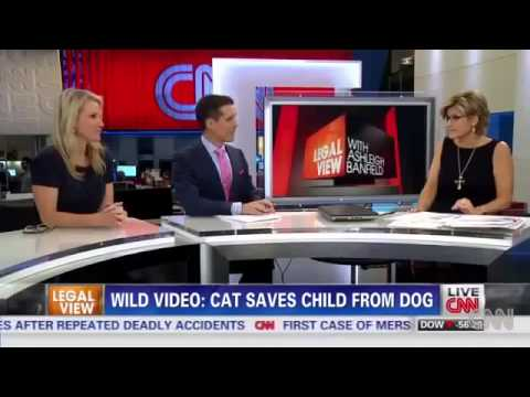 Cat SAVES Boy From Dog Attack VIDEO Hero Cat Saves Young Boy from Vicious Dog Bakersfield