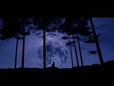 Stadiumx & Taylr Renee  Howl At The Moon  Music