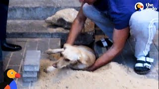 Pregnant Dog Trapped Underground Rescued by Guy Who Tears Up Sidewalk | The Dodo