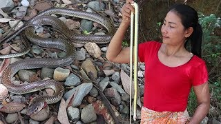 Catching Snakes in The Forest For Food - Yummy Cooking Snake Soup Recipe For Eating Delicious ep04