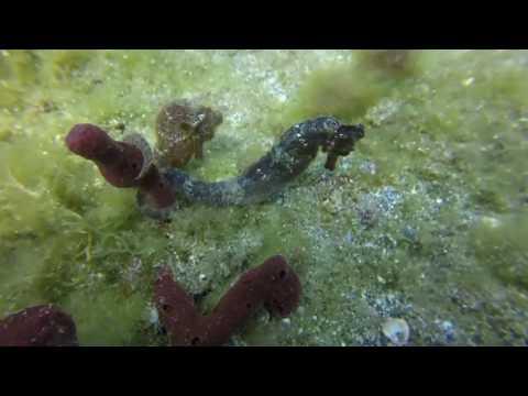 St Vincent - Scuba Diving