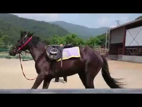 あかりの調馬索 - YouTube