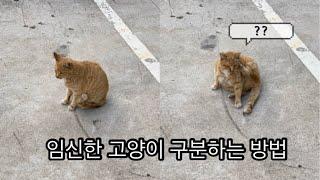 임신한 고양이 구분 방법