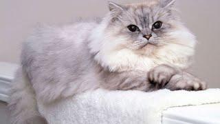 Higiene básica de un gato | Hogarmanía thumbnail
