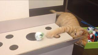 考えて遊ぶようになったひろしでした。 Hiroshi goes into the box to f...