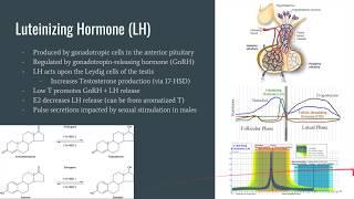 The Neuroscience Corner Ep. 2: SSRIs, LH, and FSH