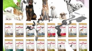 зоомагазин корма для собак