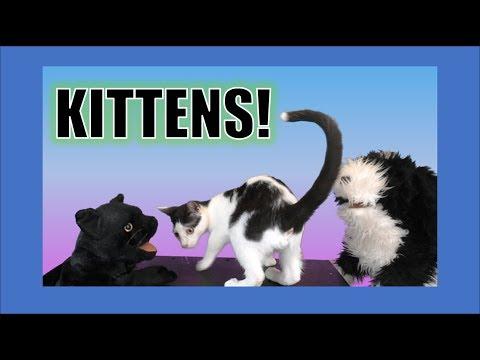 Kittens! George the Self Esteem Cat