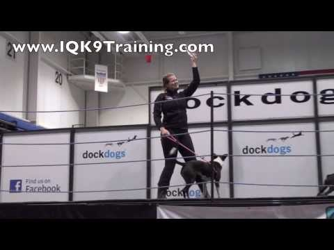 IQ K9 TRAINING | Small Dog Training | World Champion