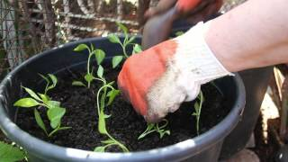 Use Planters To Add Colour To Your Garden - Gardening Tips From Canadian Tire