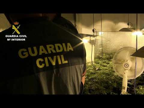 VÍDEO Plantación de marihuana en Nava