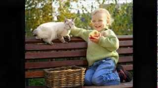 Кошка беспородная. Детская песенка