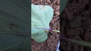 아름다운 신기한 벌레