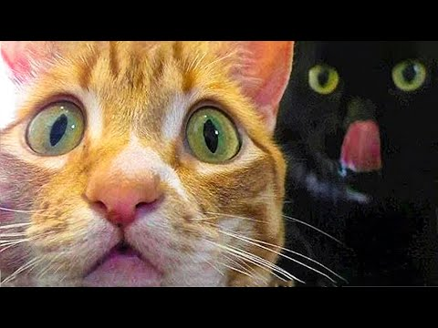 Funniest Cats And  Dogs - Try Not To Laugh - Funny Pet Animals' Life
