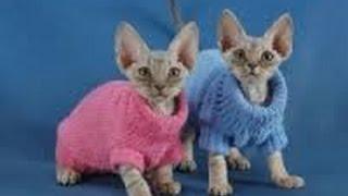 Одежда для кошек_Зоомагазин_Поводок для кошки