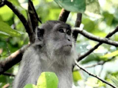 Siti Aisah Rachman @ Tetty Kadi : Cinta Monyet