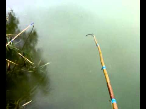 Согласие — Клев32. Бесплатная и платная рыбалка в Брянске