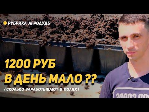Работа в полях. Сколько зарабатывают рабочие в Краснодарском крае?