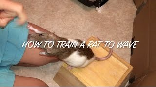How to Train a Rat to Wave