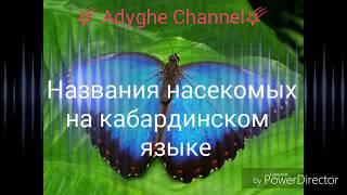 Названия насекомых на кабардинском языке. Слайд-шоу из фото.