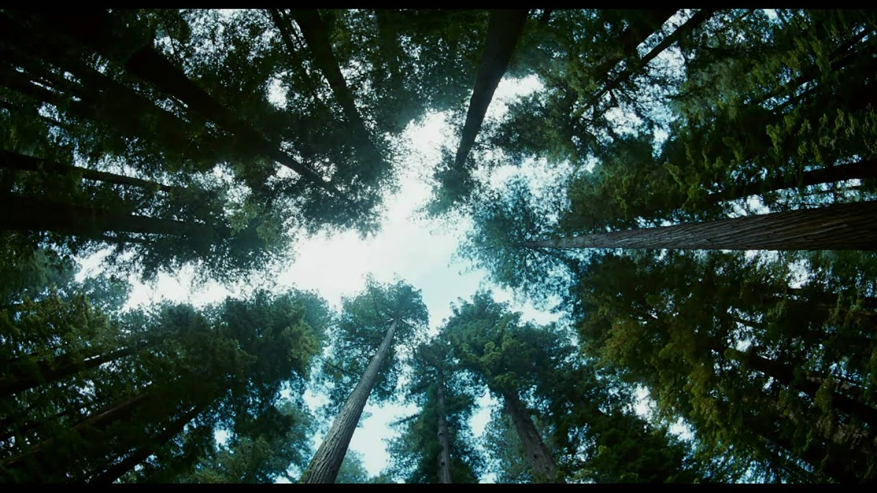 Download The Tree Of Life | trailer #B (2011) Brad Pitt Sean Penn
