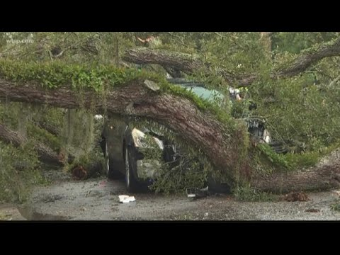 Kevin Campbell - Giant Tree Branch Falls Onto Car In Tampa, Somehow Driver Okay