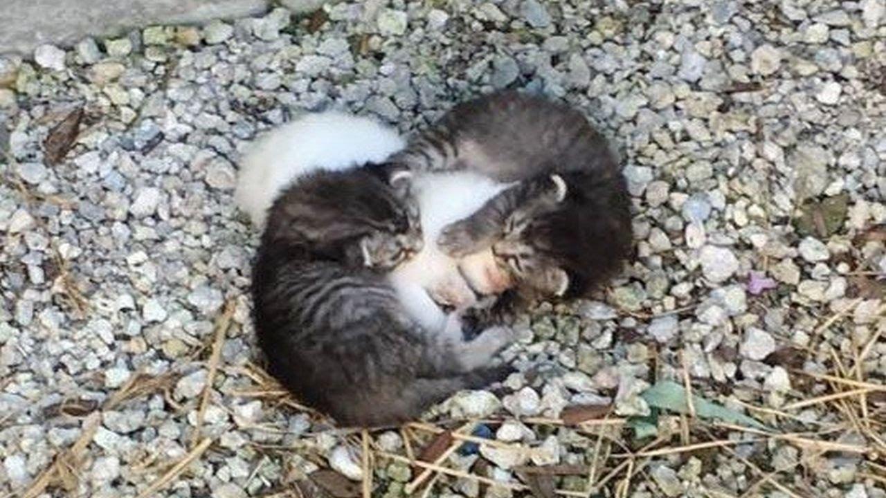 震える妹猫を包み込む2匹の兄猫達。そんな猫達のお母さんは世話好きな犬。種を越えた家族に感動する。【猫の感動する話】