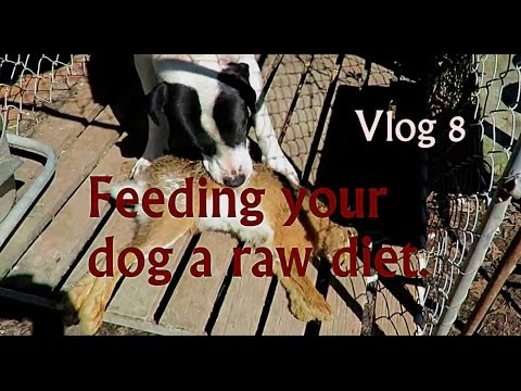 Feeding your dog a raw diet  Vlog 8